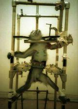 monkeyinpain