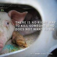 Правата на животните - ослободување