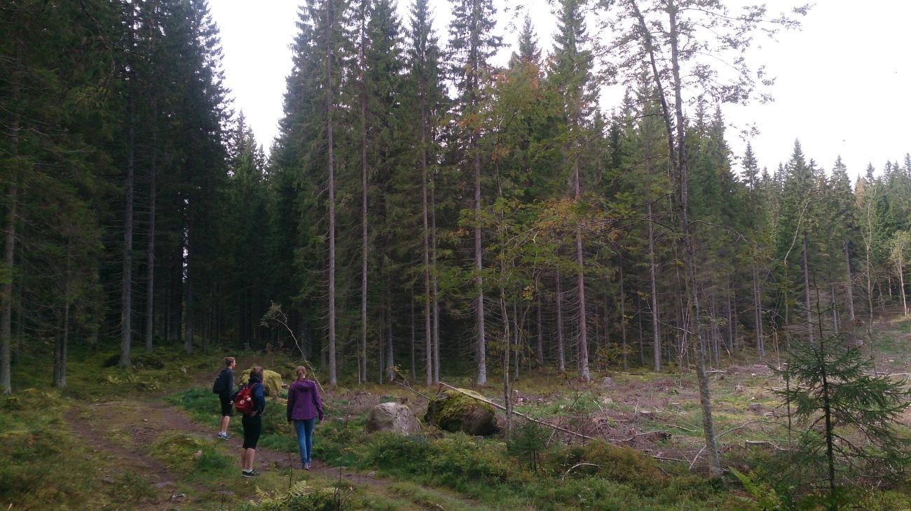 Myllyjärvi, Jyväskylä
