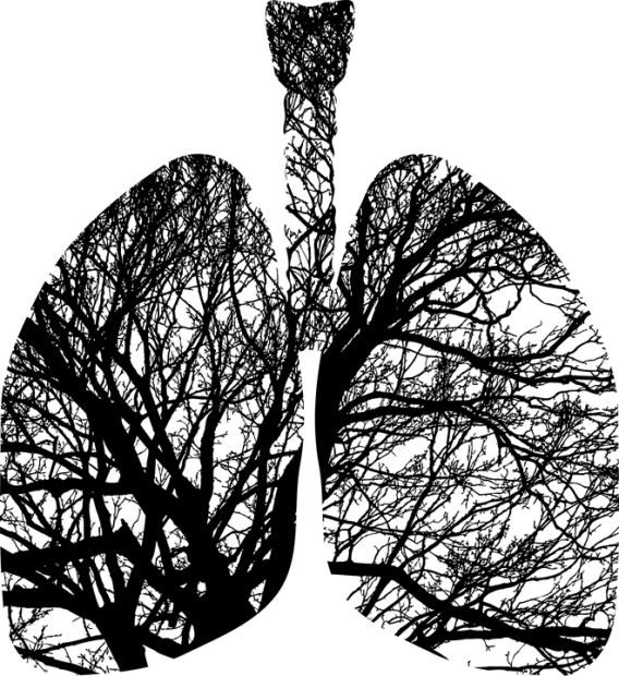 lungs-2773515_960_720