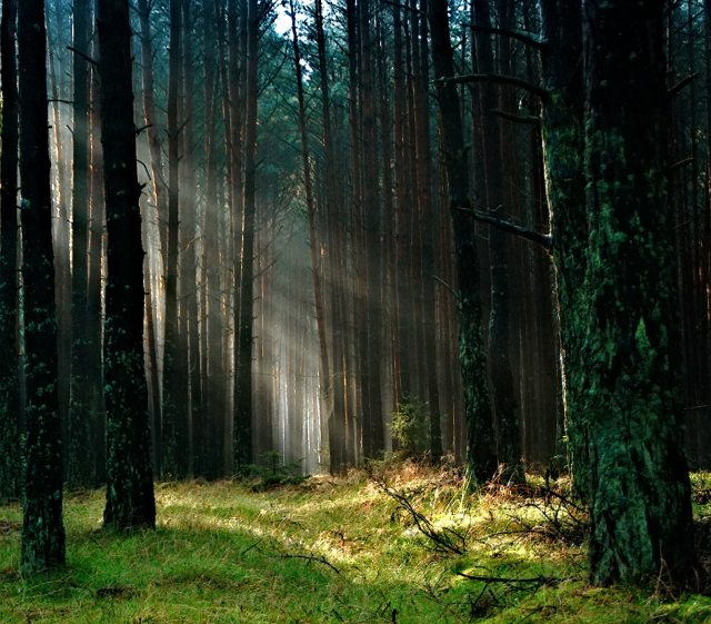 forest-with-sunlight-158251