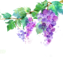 kisspng-common-grape-vine-vitis-amurensis-ink-wash-paintin-graffiti-purple-grapes-5a936a33832982.2873139915196104195373