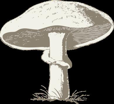 mushroom-32993_1280