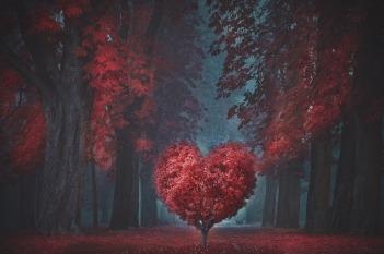 valentine-4805916_1920