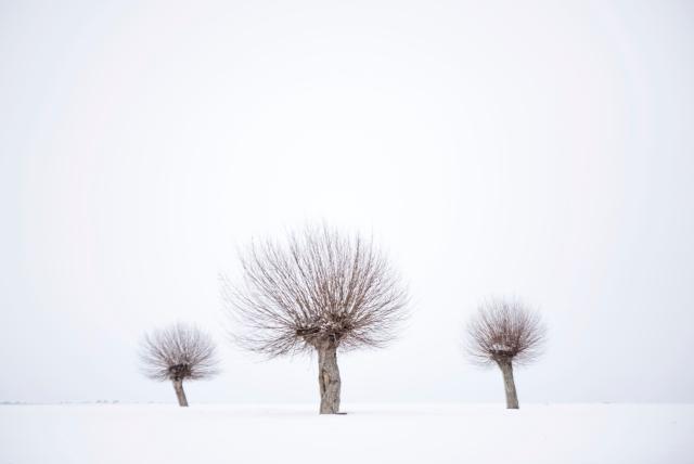 threetrees ---DSC_2048