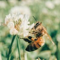 Bee grateful!