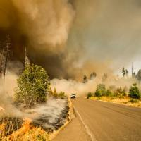 Into the Wildfires